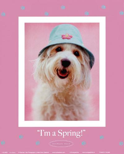 I'm a Spring-Rachael Hale-Art Print