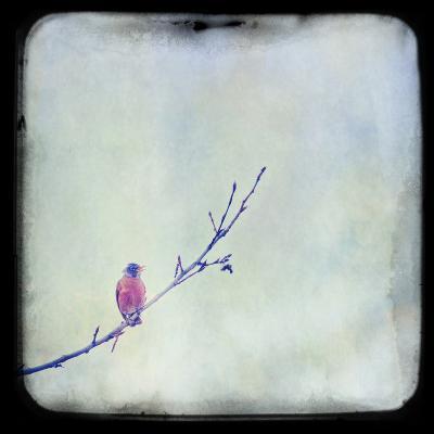 I Sing Alone-Roberta Murray-Photographic Print