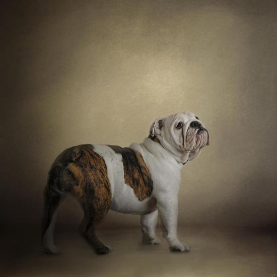 I Think I Smell a Treat Bulldog-Jai Johnson-Giclee Print