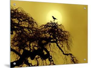 A Bird on a Tree by I.W.