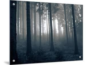 Fog in the Woods by I.W.