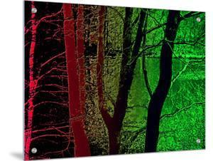 Red and Green Woods and Lake by I.W.