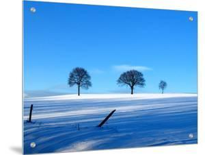 Snow Scenic with 3 Trees under Blue Skies by I.W.