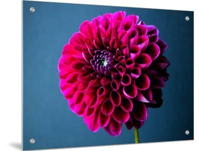 Still Life of a Magenta Flower by I.W.