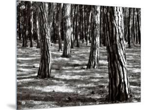 Tree Trunks in the Forest by I.W.