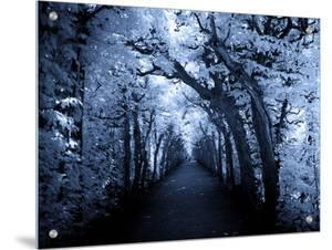Tree Tunnel in Blue Hue by I.W.