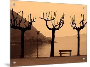 Trees and Bench by Misty Lake, Lago Maggiore, Italy by I.W.