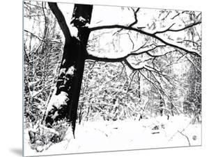Trees in Winter by I.W.