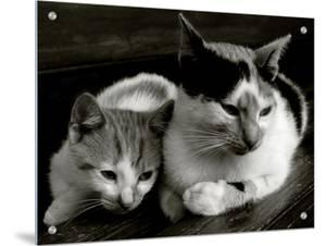 Two Cats by I.W.
