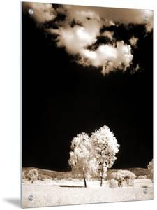 Two Trees Stand in Field by I.W.