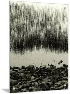 Waters Edge with Reeds by I.W.