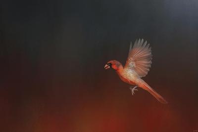I Wish I Could Fly - Cardinal 1-Jai Johnson-Giclee Print