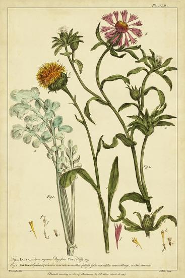 Iacea, Pl. CLll-Phillip Miller-Art Print