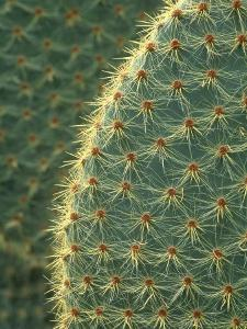 Cactus, Detail, Scotland by Iain Sarjeant