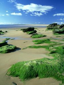 Dornoch Beach, Scotland by Iain Sarjeant