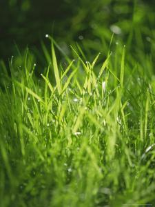 Grass Detail, Scotland by Iain Sarjeant