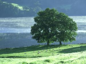 Lakeside Trees, Lake District, England by Iain Sarjeant