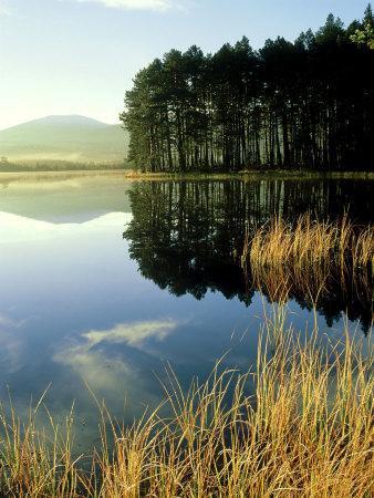 Loch Garten, Strathspey, Scotland