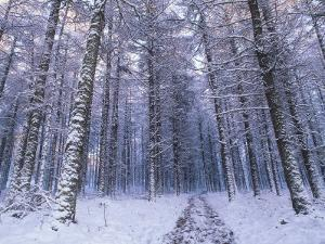 Path Through Woodland in Winter, Ross-Shire by Iain Sarjeant