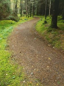 Path Through Woodland, Ross-Shire by Iain Sarjeant