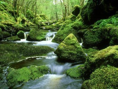 Stream and Mossy Boulders, Scotland