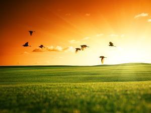Field of Grass and Flying Birds by Iakov Kalinin