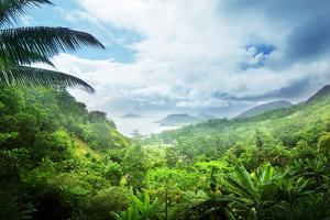 Jungle of Seychelles Island by Iakov Kalinin