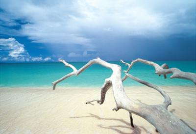 Driftwood, Antigua by Ian Cumming