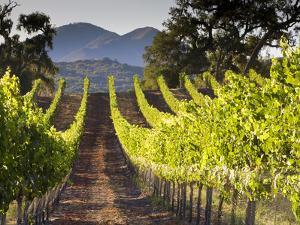 Arroye Grande, California: a Central Coast Winery by Ian Shive