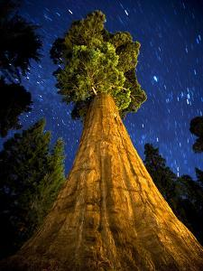 Giant Sequoia under the Milky Way by Ian Shive