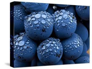 Healdsberg, Sonoma County, California: Detail of Grapes. by Ian Shive
