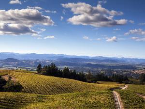 Healdsberg, Sonoma County, California: Vineyard at Sunset. by Ian Shive