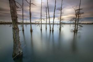 Monroe, LA: Black Bayou Lake, Part Of The National Wildlife Refuge & Fish & Wildlife Service by Ian Shive
