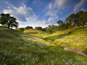 Rolling Green Hills of Central California No.3 by Ian Shive