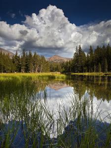 Yosemite National Park, California: Pond Along Entrance Gate at Tioga Pass and Tuolumne Meadows. by Ian Shive