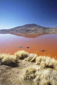 Laguna Colorada on the Altiplano, Potosi Department, Bolivia, South America by Ian Trower
