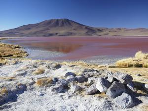 Laguna Colorada on the Altiplano, Potosi Department, Bolivia by Ian Trower