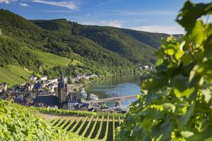 View of vineyards and River Moselle, Bernkastel-Kues, Rhineland-Palatinate, Germany, Europe by Ian Trower