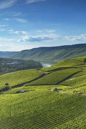 View of vineyards and River Moselle, Bernkastel-Kues, Rhineland-Palatinate, Germany