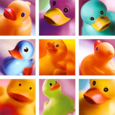 Duck Family Portraits by Ian Winstanley