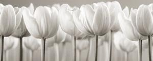 White Tulips by Ian Winstanley