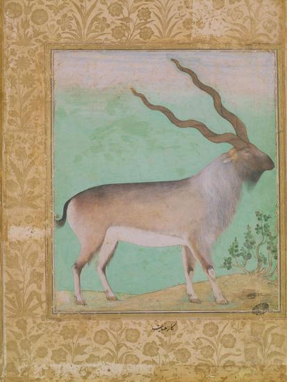 Ibex, Mughal--Giclee Print