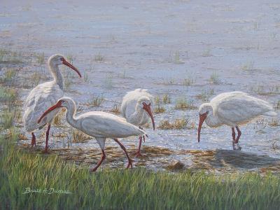 Ibis Excursion-Bruce Dumas-Giclee Print