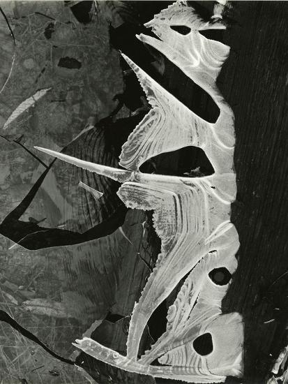 Ice Formation, 1975-Brett Weston-Photographic Print