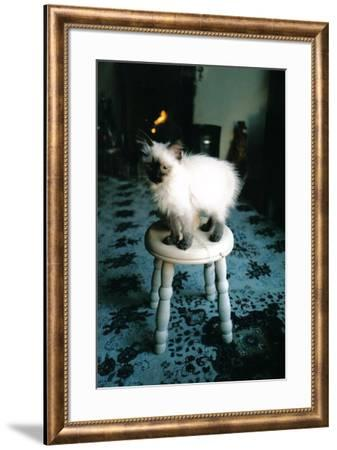 Ice kitten's sister-Vincent Alexander Booth-Framed Photographic Print