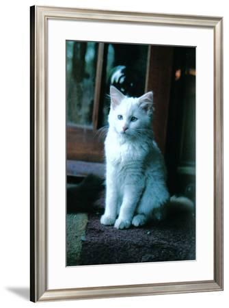 Ice kitten-Vincent Alexander Booth-Framed Photographic Print