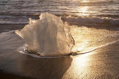 Ice Tulip-Michael Blanchette Photography-Photographic Print