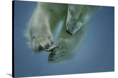 Icebaer-Peter Wagner-Stretched Canvas Print