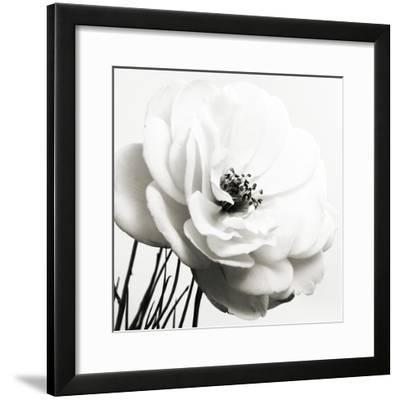Iceberg Rose BW-Tom Quartermaine-Framed Giclee Print