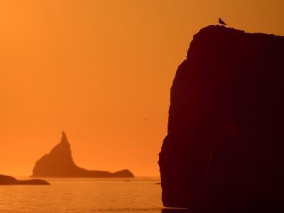 Icebergs Silhouetted at Sunset, Disko Bay, Greenland, August 2009-Jensen-Photographic Print